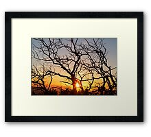 Tree Branches Dancing In The Sunlight Framed Print