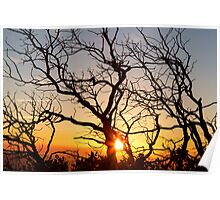 Tree Branches Dancing In The Sunlight Poster