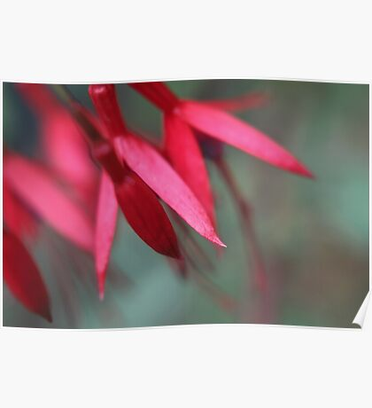 Fuschia, a floral abstract Poster