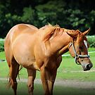 Another Horse Image by WeeZie