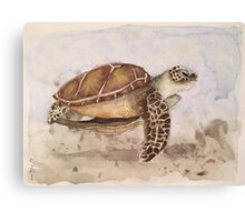 Sea Turtle-scroll down to view more of my work Canvas Print