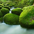 Greenery, Toorongo River, Gippsland, Victoria, Australia by Michael Boniwell