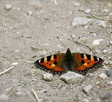 Resting Butterfly by dinajalaf