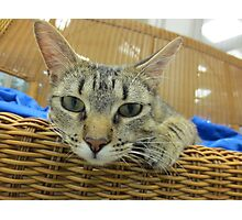 Tabby Cat Waiting for adoption Photographic Print