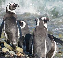Penguins by shawnzahavi