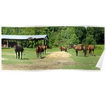 Panoramic View of Horses Poster