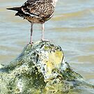 Dry Footed Gull by JohnYoung
