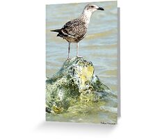 Dry Footed Gull Greeting Card