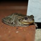 Perons Tree Frog by Richard Cassar
