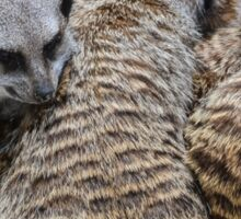 All snug: meerkat family Sticker