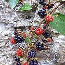 Blackberries by Fara