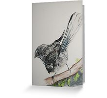 New Zealand Fantail Greeting Card