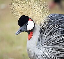 Beautiful Endangered East African Crowned Crane by Doty
