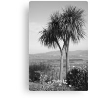 Two palm trees Canvas Print