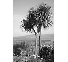 Two palm trees Photographic Print