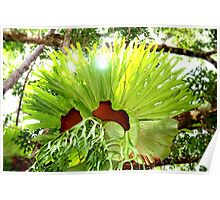 Giant Staghorn Poster