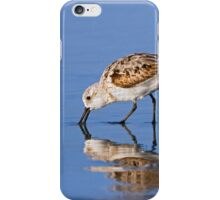 Foraging Sanderling on the Beach iPhone Case/Skin