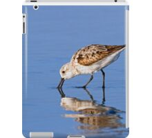 Foraging Sanderling on the Beach iPad Case/Skin