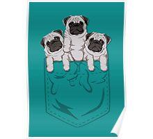 Pocket Pug Poster