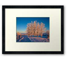 Frozen Poplar Trees I, Northern Ireland Framed Print