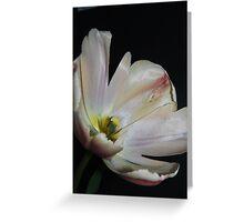 Apricot Tulip Greeting Card