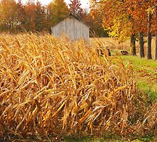 Autumn Corn by Mary Carol Story
