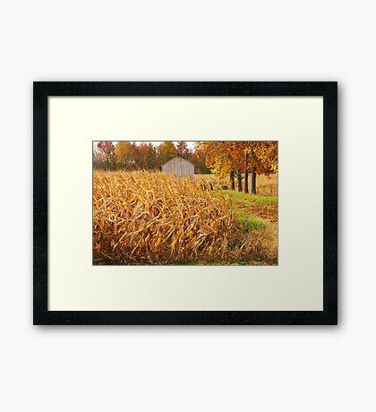 Autumn Corn Framed Print