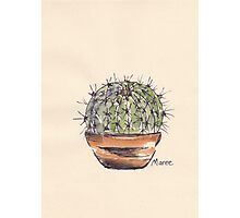 Cactus love (Echinopsis) Photographic Print