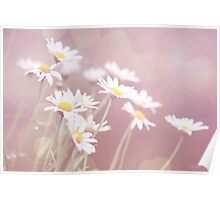 Dreamy Daisies Poster