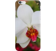 Orchid splendor iPhone Case/Skin