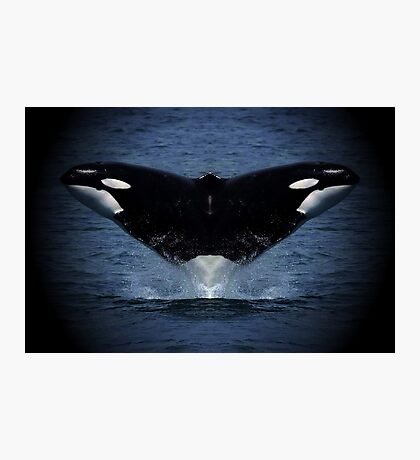 ORCA TAIL HEADS Photographic Print