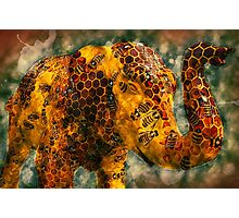 The Elephant in the Hive Photographic Print