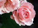 Pink Frills by Tiffany Dryburgh