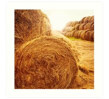 Golden hay bales on the field at summer at sunset light Art Print