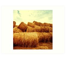 Golden hay bales on the field at sunset Art Print