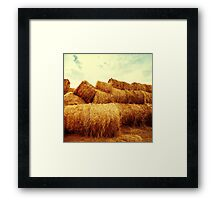 Golden hay bales on the field at sunset Framed Print
