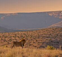 Male Lion At Sunrise Sticker