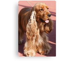 cocker dog Canvas Print