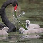 Cygnet Education  by byronbackyard