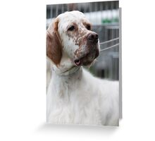 pointer dog Greeting Card