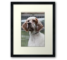 pointer dog Framed Print