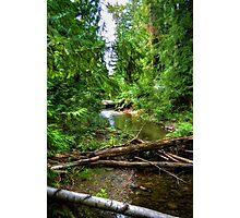 Wilderness Stream Photo Art Photographic Print
