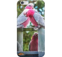 Pink and Grey Galahs iPhone Case/Skin