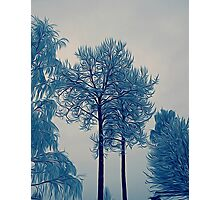 'Winter Trees In Leksand' Photographic Print