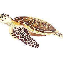 Turtle by popartbynatalie