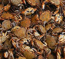 Crabs! by Chris Ayre