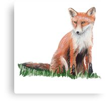 Looking Foxy Canvas Print