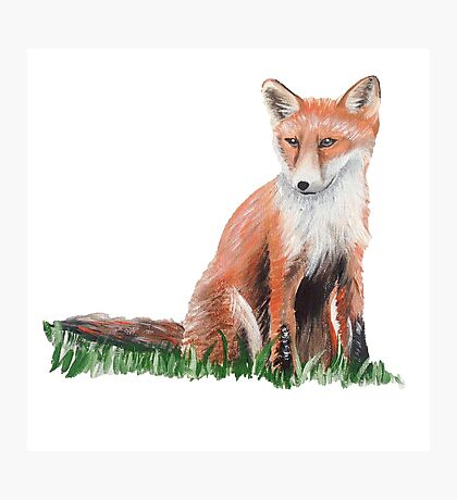 Looking Foxy Photographic Print