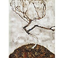 Egon Schiele - Small Tree in Late Autumn (1911)  Photographic Print