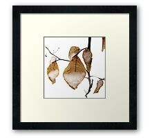 Young Beech Leaves in the Snow Framed Print